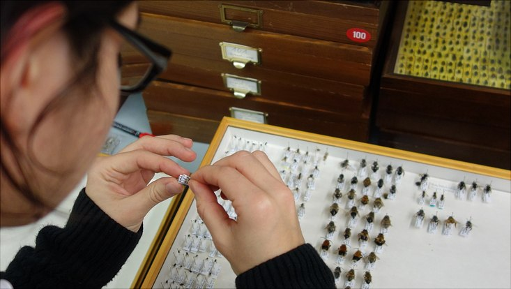 Neusortierung der Bienensammlung