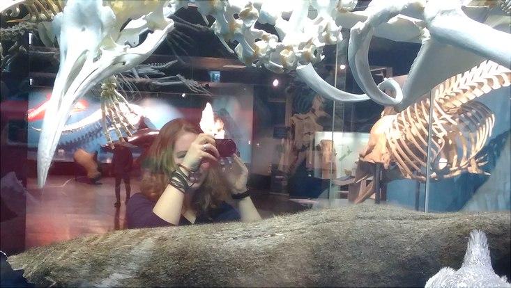 Mädchen fotografiert Glasvitrine im Zoologischen Museum