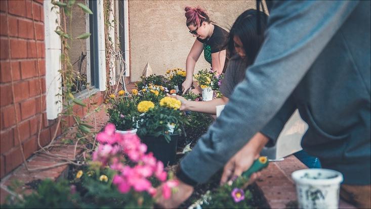 drei Personen pflanzen bunte Blumen in ein Hochbeet vor einer Hauswand aus roten Ziegelsteinen