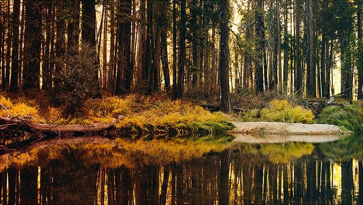 Wald mit See im Vordergrund