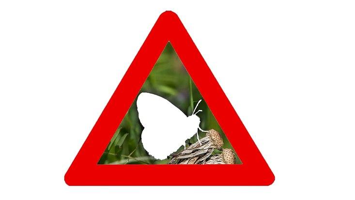 ausgelöschter Schmetterling in einem Warndreieck