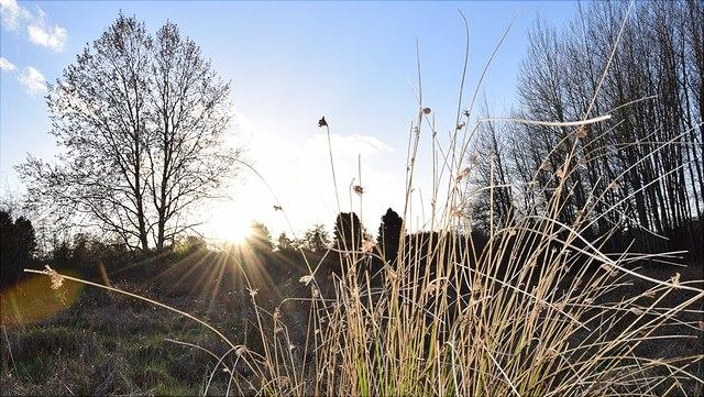 Grasbüschel, im Hintergrund Baum und Sonne