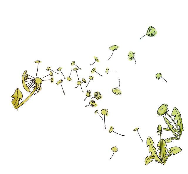 Eine grüne Pusteblume von der einzelne Samen wegfliegen.