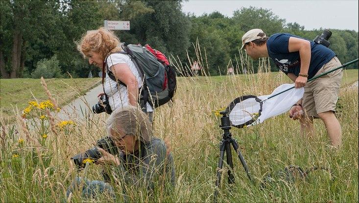 Menschen im hohen Gras auf der Suche nach Insekten