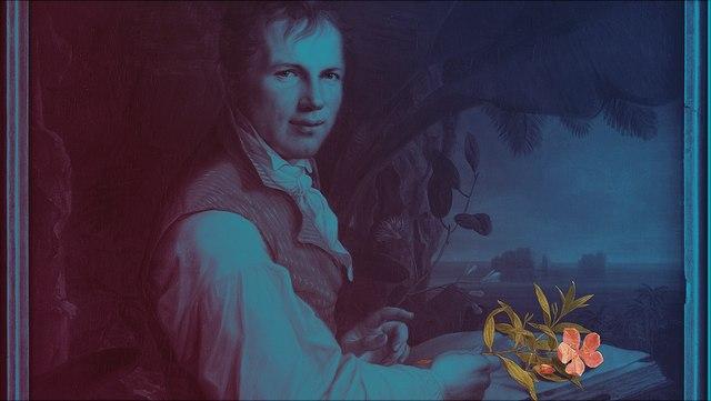 in Blau gehaltenes Gemälde Humboldts, farbige Blume rechts unten