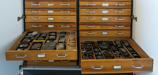 Sammlung Paläontologie