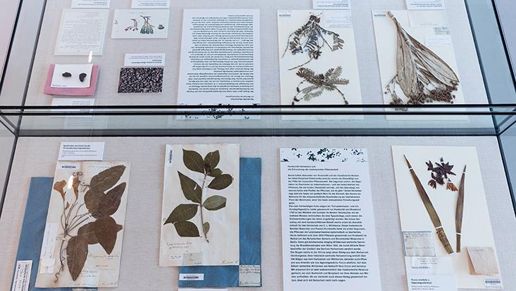 Humboldt lebt Sonderausstellung Herbarium