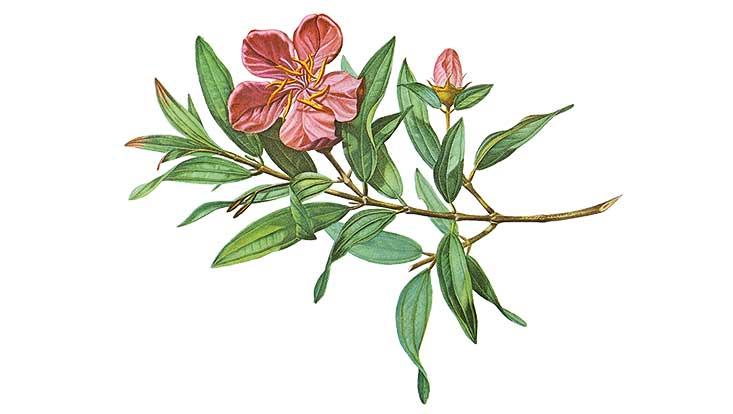 grüner Zweig mit lachsfarbener Blüte