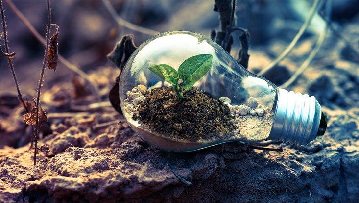 In einer Glübirne wächst eine kleine grüne Pflanze