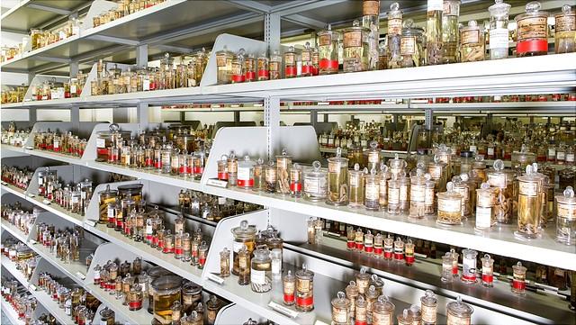 Sammlung Zoologie