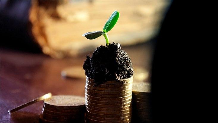Eine kleine grüne Pflanze mit ein bisschen Erde auf einem Stapel Münzen