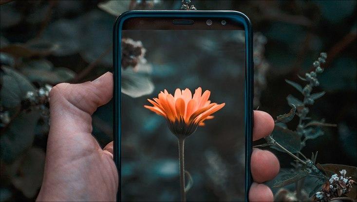Smartphone nimmt ein Foto von einer orangenen Blume.