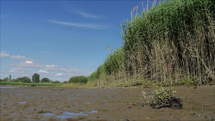Naturschutzgebiet Schweenssand