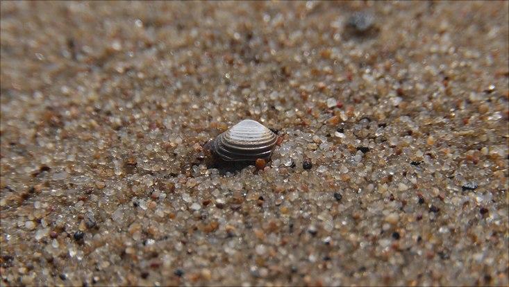 Sand auf Neßsand