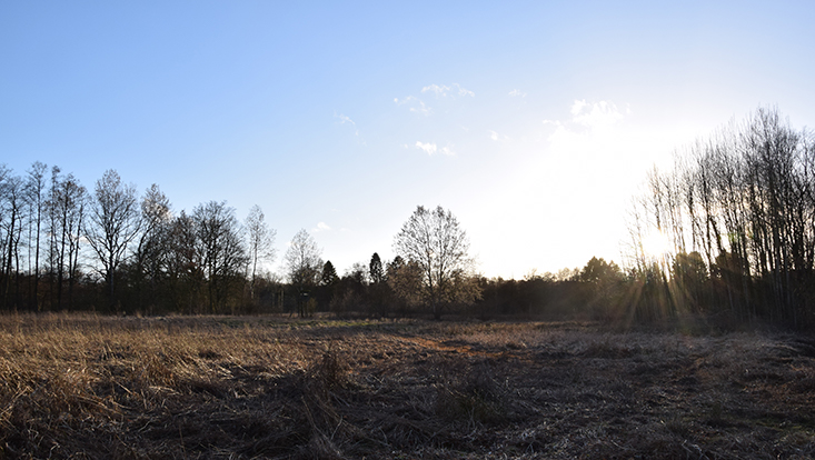 Geplantes Naturschutzgebiet Diekbek