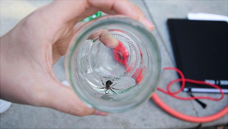 Spinnen sammeln an der Alster