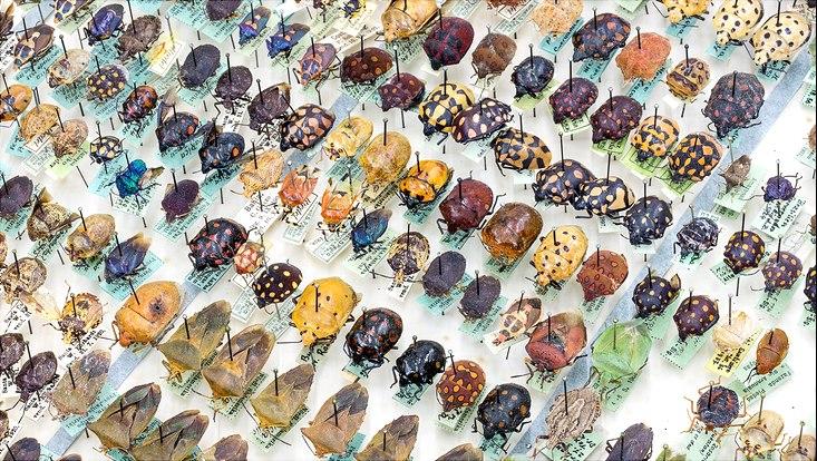 Käfer-Sammlung