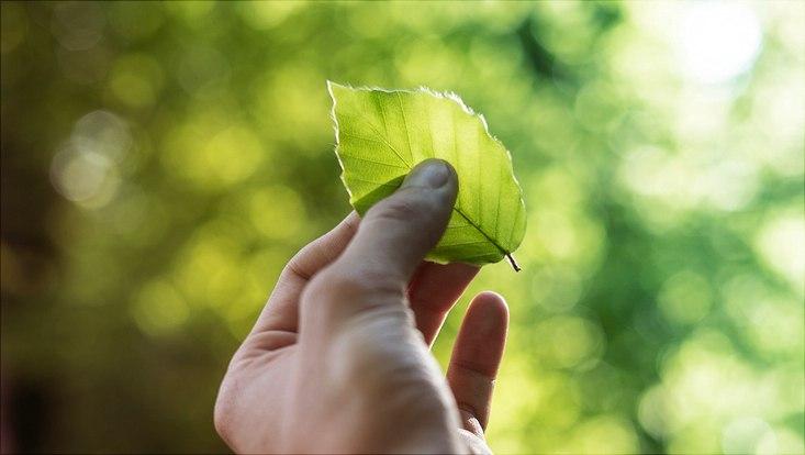 Blatt für Nachhaltigkeit