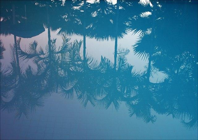 Palmen spiegeln sich im Wasser
