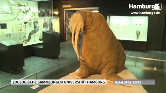Hamburgs Beste