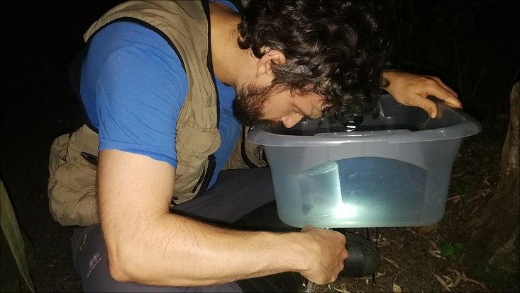 Biologiestudent Ricardo Lou war nachts den Spinnen mit auf der Spur.