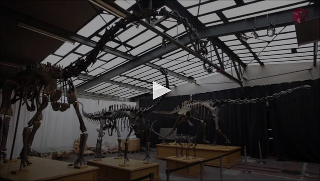 Dinosaurierforschung am CeNak